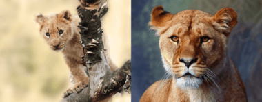Growing From Cub to Lioness: My 2020 Marketing Internship at New Perspective