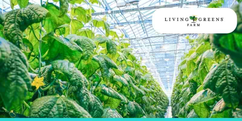success stories - case studies - living greens farm